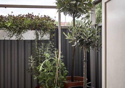Voltaire - evergreen